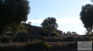 Foto de Olivar centenario en Maella. con excelente acceso.