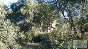 Foto de Masía de piedra en Maella. con olivos centenarios por 29.000€