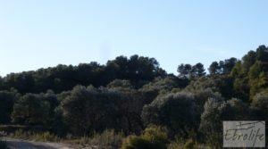 Masía de piedra en Maella. en oferta con olivos centenarios por 29.000€