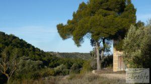 Masía de piedra en Maella. en venta con olivos centenarios