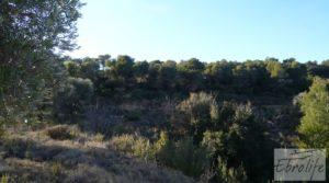 Foto de Masía de piedra en Maella. en venta con olivos centenarios