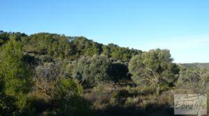 Se vende Masía de piedra en Maella. con olivos centenarios por 29.000€