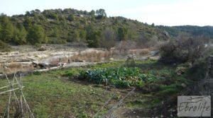 Vendemos Antiguo Molino aceitero en Arens de Lledo. con fosa séptica por 34.000€