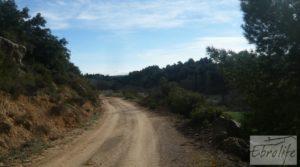 Finca con pozo en La Fresneda a buen precio con almendros y olivos