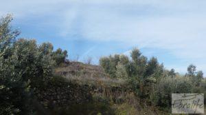 Foto de Finca con pozo en La Fresneda con almendros y olivos por 48.000€