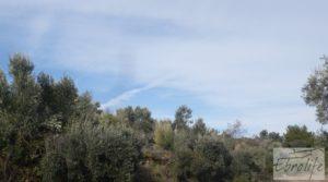 Finca con pozo en La Fresneda en venta con almendros y olivos por 48.000€