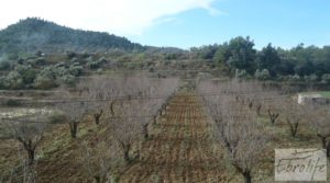 Finca con pozo en La Fresneda en oferta con almendros y olivos por 48.000€