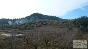 Foto de Finca con pozo en La Fresneda con almendros y olivos