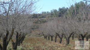Vendemos Finca con pozo en La Fresneda con almendros y olivos por 48.000€
