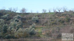Finca con pozo en La Fresneda en venta con almendros y olivos