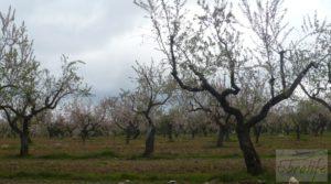 Magnífica masía en Valderrobres, rodeada de almendros. en oferta con barbacoa