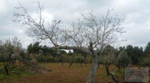 Vendemos Magnífica masía en Valderrobres, rodeada de almendros. con almendros y olivos en plena producción