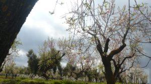 Magnífica masía en Valderrobres, rodeada de almendros. a buen precio con almendros y olivos en plena producción por 110.000€