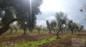 Detalle de Magnífica masía en Valderrobres, rodeada de almendros. con almendros y olivos en plena producción por 110.000€