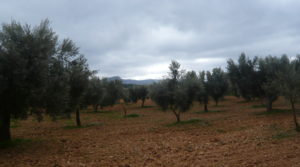 Finca de avellanos en Cretas en oferta con buen acceso por 63.000€