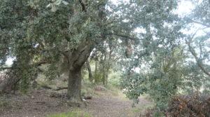 Detalle de Finca de avellanos en Cretas con buen acceso por 63.000€