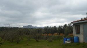 Se vende Finca de avellanos en Cretas con pozo de agua