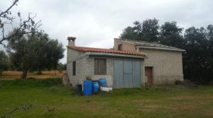 Se vende Finca de avellanos en Cretas con buen acceso
