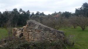 Se vende Finca de avellanos en Cretas con pozo de agua por 63.000€