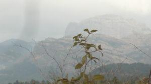 Finca de avellanos en Cretas a buen precio con buen acceso