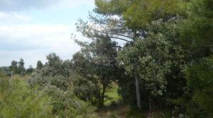 Finca de avellanos en Cretas en venta con buen acceso