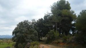 Detalle de Finca de avellanos en Cretas con pozo de agua