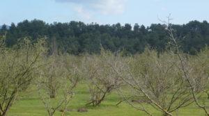 Finca de avellanos en Cretas en venta con pozo de agua