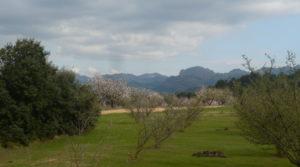 Finca de avellanos en Cretas en oferta con pozo de agua por 63.000€