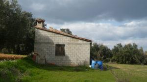 Finca de avellanos en Cretas a buen precio con pozo de agua por 63.000€