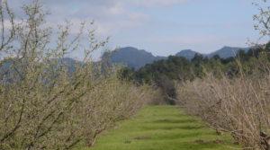 Finca de avellanos en Cretas a buen precio con buen acceso por 63.000€