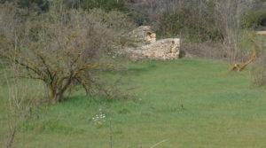 Finca de avellanos en Cretas para vender con pozo de agua por 63.000€