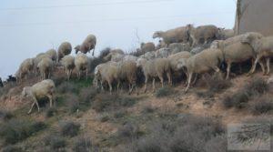 Estudio-chalet en Alcañiz. en venta con ubicación privilegiada
