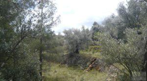 Casa y olivar en Fornoles a buen precio con buenas vistas