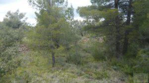 Foto de Casa y olivar en Fornoles con bodega