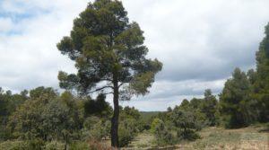 Vendemos Casa y olivar en Fornoles con buenas vistas