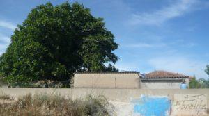 Foto de Estupenda finca de regadío en Caspe con almendros y frutales. en venta con agua y electricidad por 72.000€