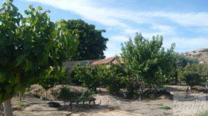 Estupenda finca de regadío en Caspe con almendros y frutales. en venta con agua y electricidad