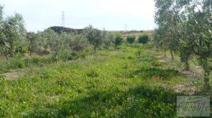 Detalle de Estupenda finca de regadío en Caspe con almendros y frutales. con agua y electricidad