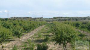 Estupenda finca de regadío en Caspe con almendros y frutales. en venta con agua y electricidad por 72.000€
