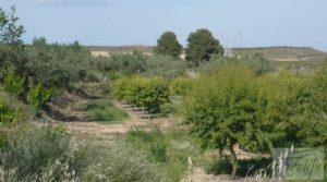 Estupenda finca de regadío en Caspe con almendros y frutales. para vender con agua y electricidad por 72.000€