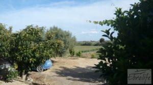 Estupenda finca de regadío en Caspe con almendros y frutales. para vender con agua y electricidad