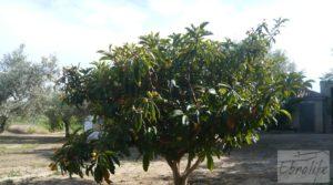Foto de Estupenda finca de regadío en Caspe con almendros y frutales. en venta con agua y electricidad