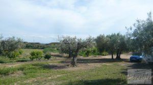 Estupenda finca de regadío en Caspe con almendros y frutales. en oferta con agua y electricidad por 72.000€