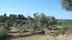 Olivar en Calaceite con masía tradicional. en venta