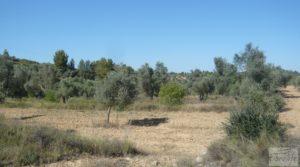 Olivar en Calaceite con masía tradicional. en oferta