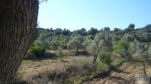 Vendemos Olivar en Calaceite con masía tradicional. por 48.000€