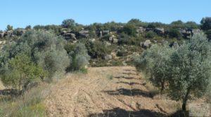 Olivar en Calaceite con masía tradicional. en oferta por 48.000€