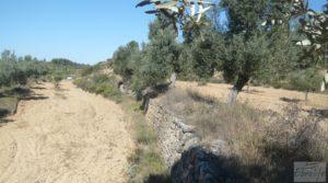 Olivar en Calaceite con masía tradicional. a buen precio por 48.000€