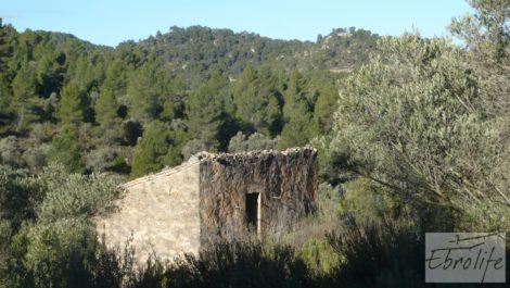Finca de olivos y bosque en Arens de Lledo.