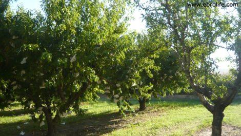 Terreno de huerta en Caspe